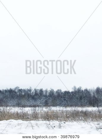 Dull Snow Winter Landscape