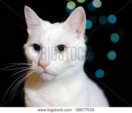 White Cat On Bokeh Lights Background