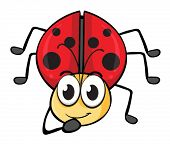illustration of a ladybug on a white background