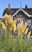 foto of pampas grass  - pampas grass in front of an old red brick house - JPG