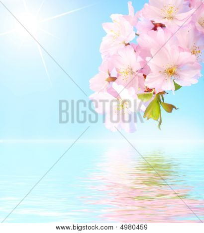 Pink Cherry Blossom Reflection