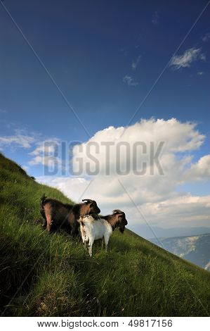 Goats On A Mountain