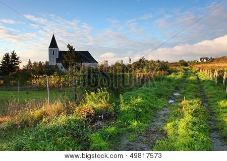 Rows Of Vines To Sunrise With Church In Background