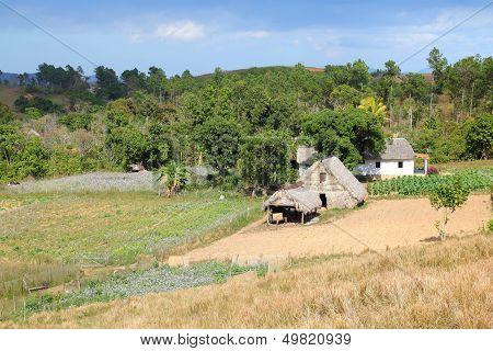 Cuba Agriculture