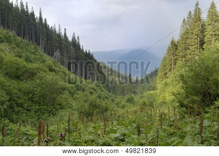 Mountain Scenery In Carpathians