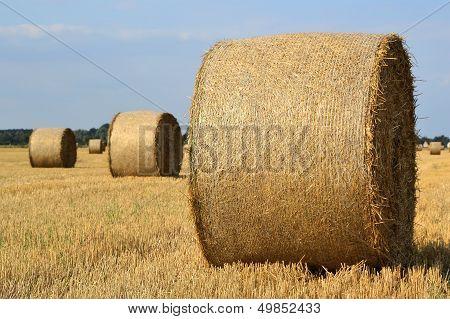 Straw as animal feed