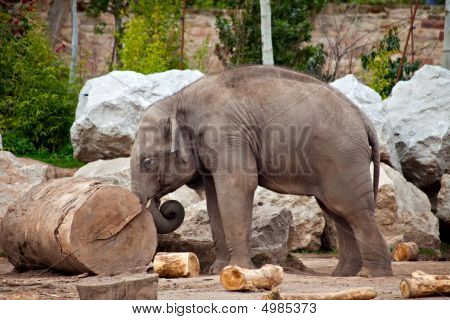 Elephant And Log