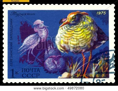 Vintage  Postage Stamp. Male Ruffs.