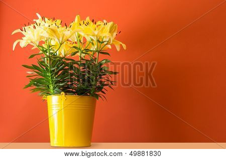 lily flowers in yellow bucket