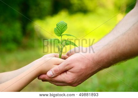 Father's and son's hands holding green growing plant over nature background. New life, spring and ecology concept