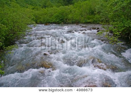 Forest And White Water Rapids,
