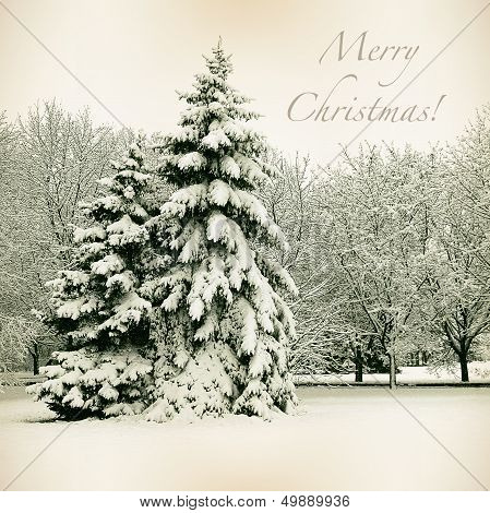 Retro Card With Merry Christmas, Trees And Christmas Trees In Snow Winter Landscape