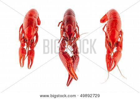 Three Crayfish