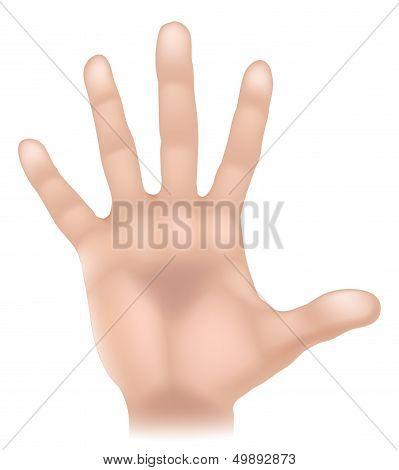 Hand Body Part Illustration