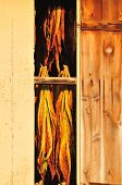 image of tobacco barn  - Closeup of Tobacco leaves drying in a barn at sunset - JPG