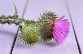 foto of scottish thistle  - Thistle flower on wooden background - JPG