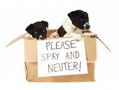 stock photo of spayed  - Two puppies in a cardboard box with a  - JPG