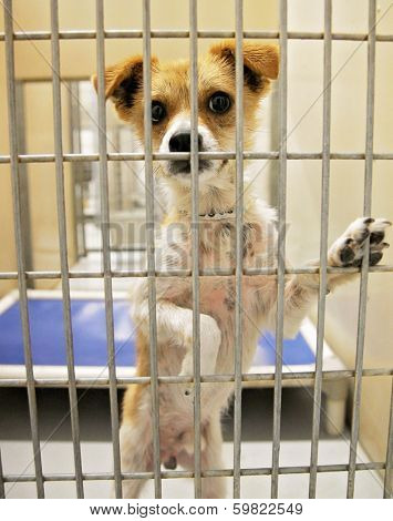 a dog in an animal shelter, waiting for a home to be adopted