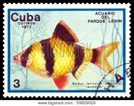 Vintage  Postage Stamp. Barbus Tetrazona Tetrazona.