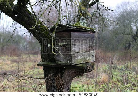 old hive