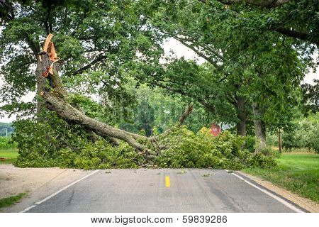 Tree fallen across a road