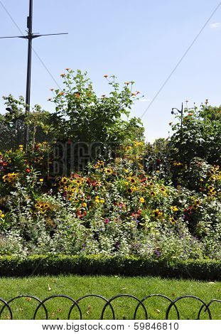 Bush of flowers in the garden in Paris