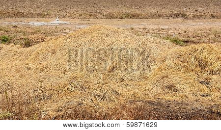 Straw On Ground