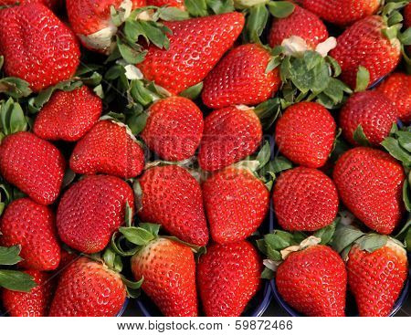 Red Strawberry To The Delight Of Gourmands