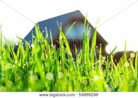 Green Grass On A Lawn About The House