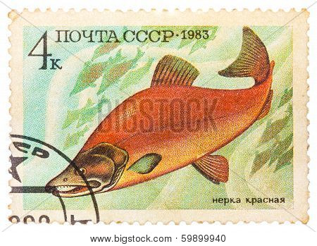 Post Stamp Printed In Ussr (cccp, Soviet Union) Shows Oncorhynchus Nerka (sockeye, Red Or Blueback S