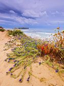 image of tomas  - Coastline near Sant Tomas on Menorca Balearic Islands Spain - JPG