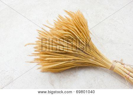 Sheaf Of Wheat On Ground.