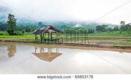 Hut In Rice Farm Field