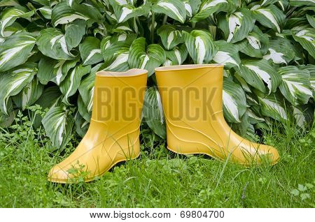 Pair Rain Rubber Yellow Boots On  Garden Grass