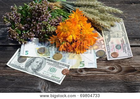 Health Is Money - Medical Herbs And Money Concept