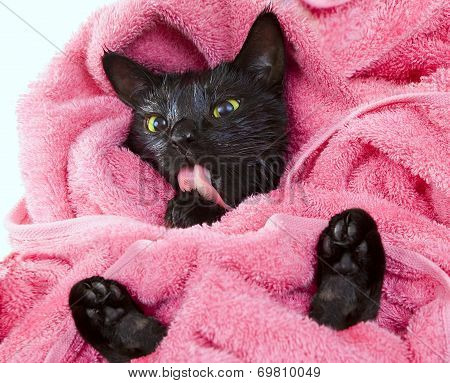 Cute Black Soggy Cat Licking After A Bath, Funny Little Demon