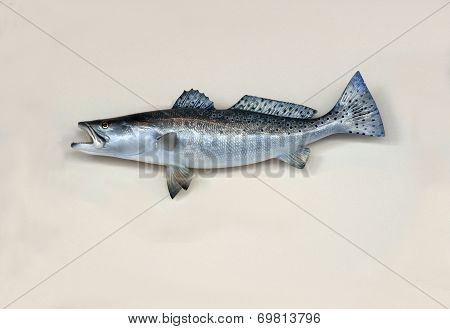 Saltwater Sea Trout Wall Mount