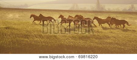A herd of horses. The rising sun. Horses walk in freedom. Mustangs.