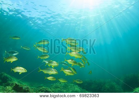 Fish shoal Mediterranean Sea