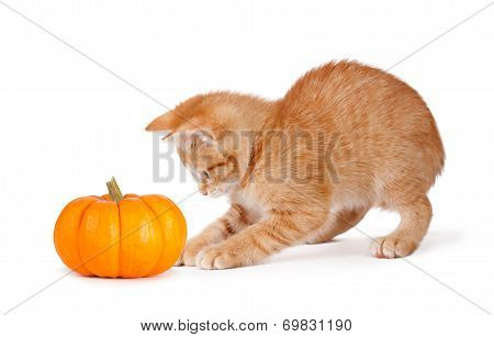 Cute Orange Kitten Playing With A Mini Pumpkin On White.