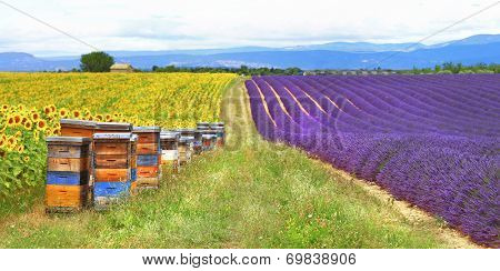 Provence, France - fields of lavader and sunflowers with beehive