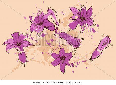 Hyacinth Flowers In Purple Color