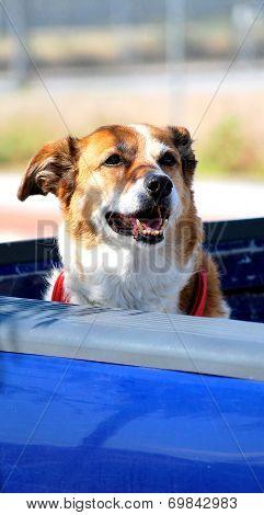 Dog in truck.