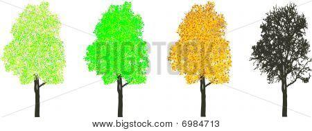 Árvore em quatro temporada