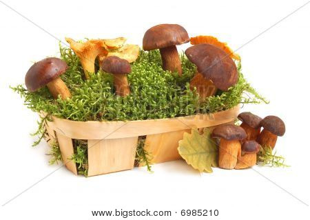 King Boletus Edulis And Chanterelles