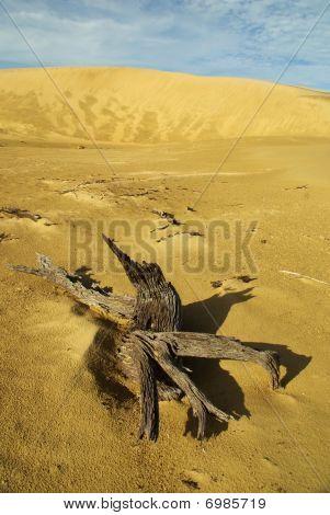 Dead Tree In A Sand Desert