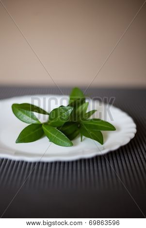Plate With The Green Leaves As Symbol Of Vegetarianism Or Diet