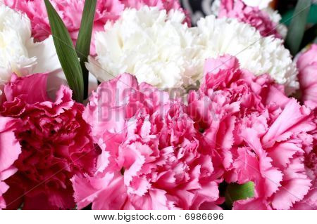 Pink And White Carnations