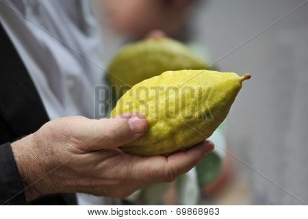 Beautiful large male hands hold a ritual Citron fruit for the Jewish holiday of Sukkot