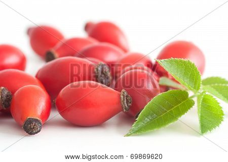 Rosehips With Green Leaf